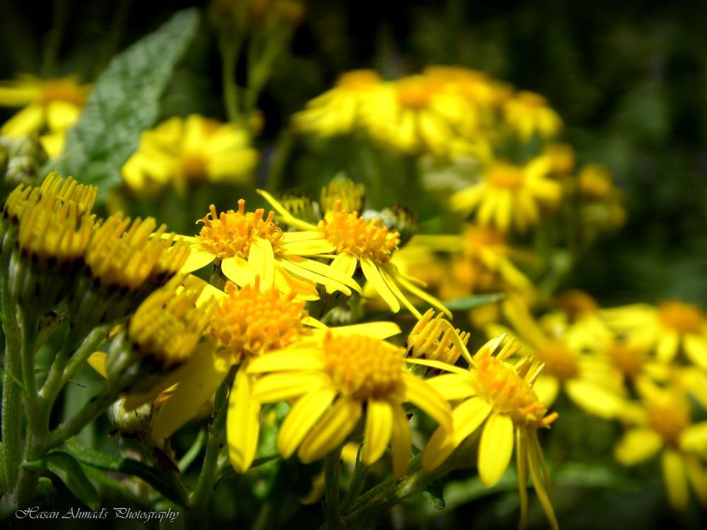 Photo in Nature #yellow #flowers #beautiful