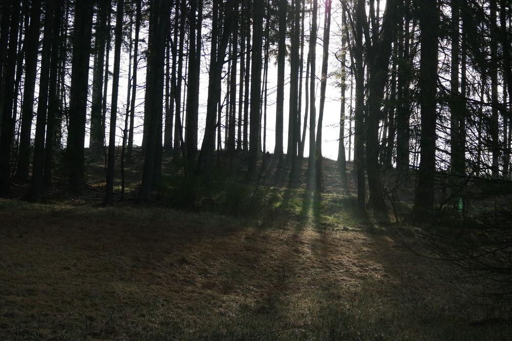 Morning in the forest near Munich - Morgens im Wald bei München by Hotel Buchenhain Photography