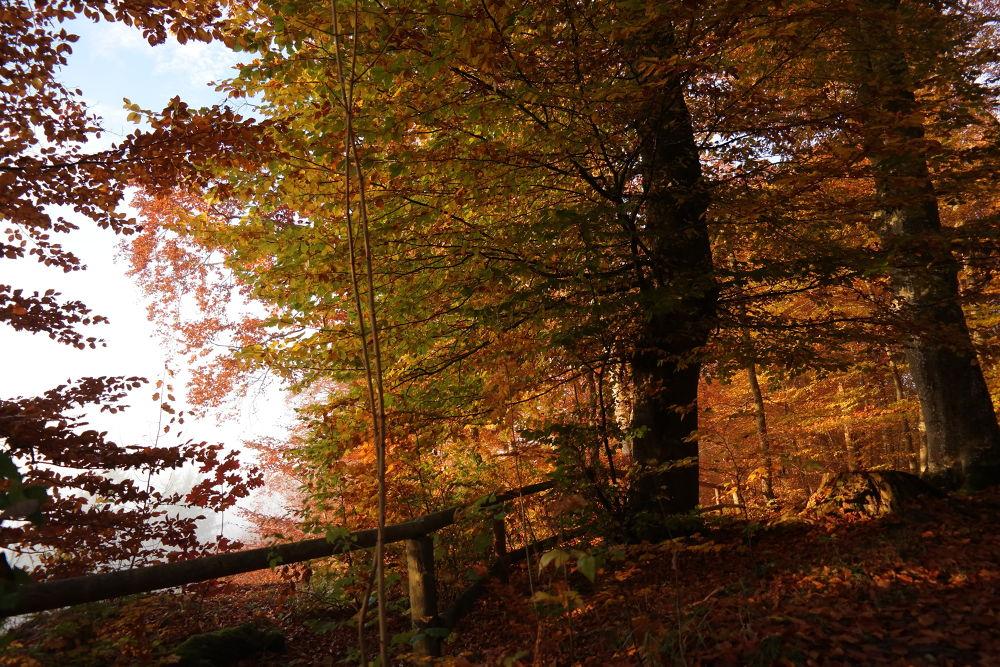 Colors of autumn - Herrliche Farbenpracht im Herbst - so zauberhaft ist ein Urlaub bei München by Hotel Buchenhain Photography