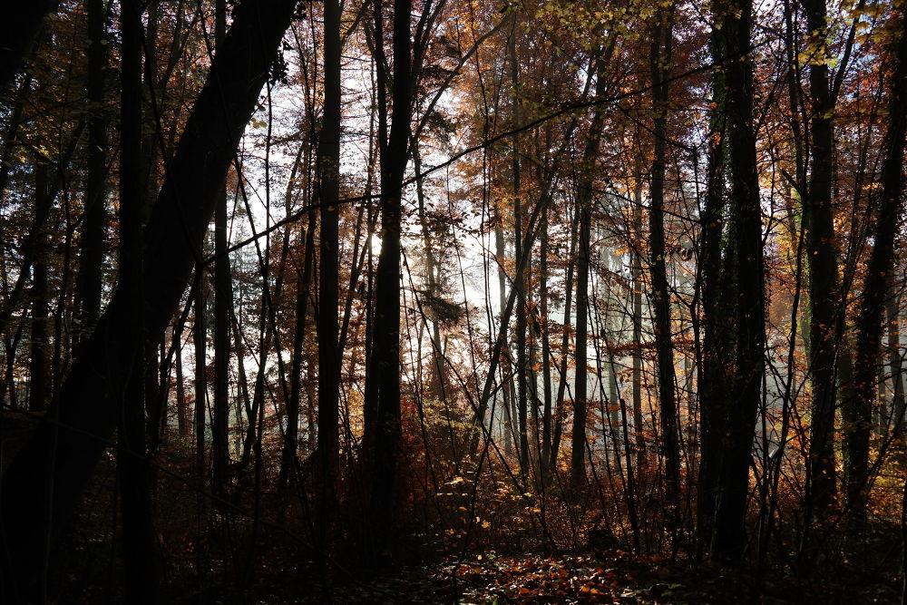 Falling leaves in autumn - Fallende Blätter im Herbst by Hotel Buchenhain Photography