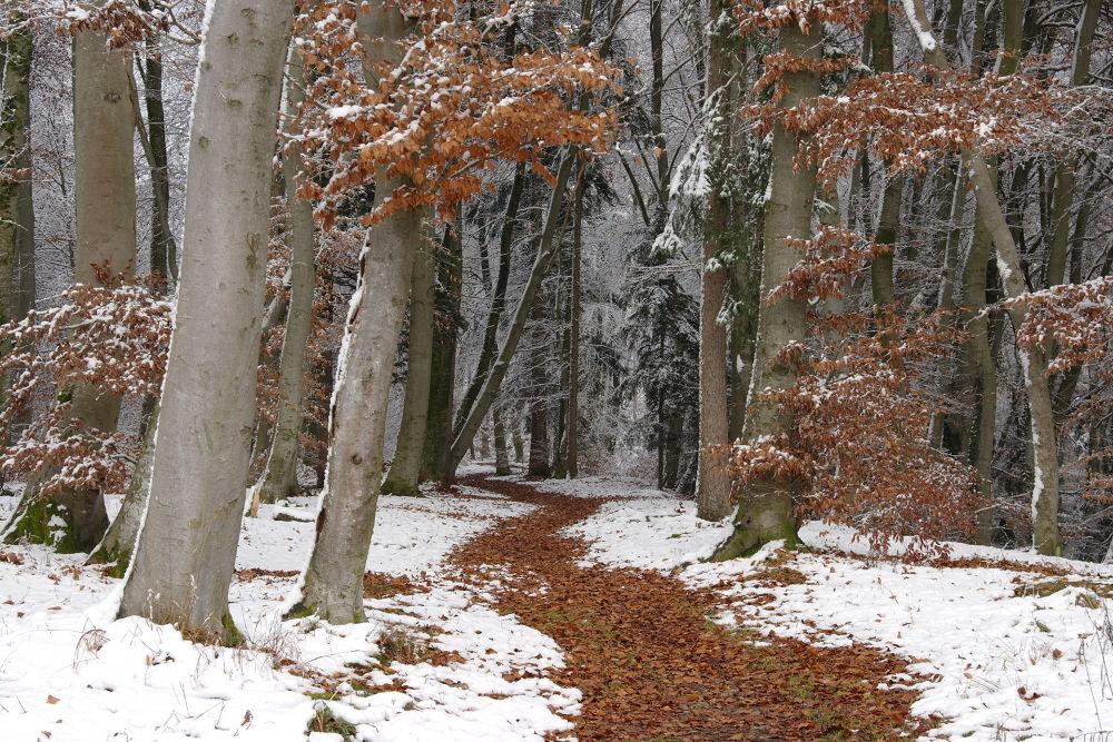 Autumn meets winter in Bavaria - Herbst trifft Winter in München by Hotel Buchenhain Photography