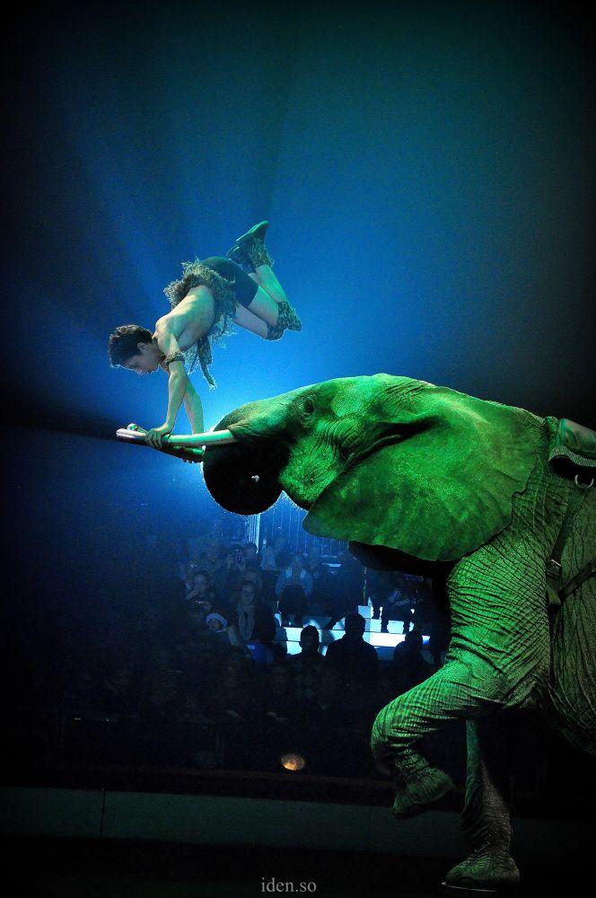 elephant by idenso