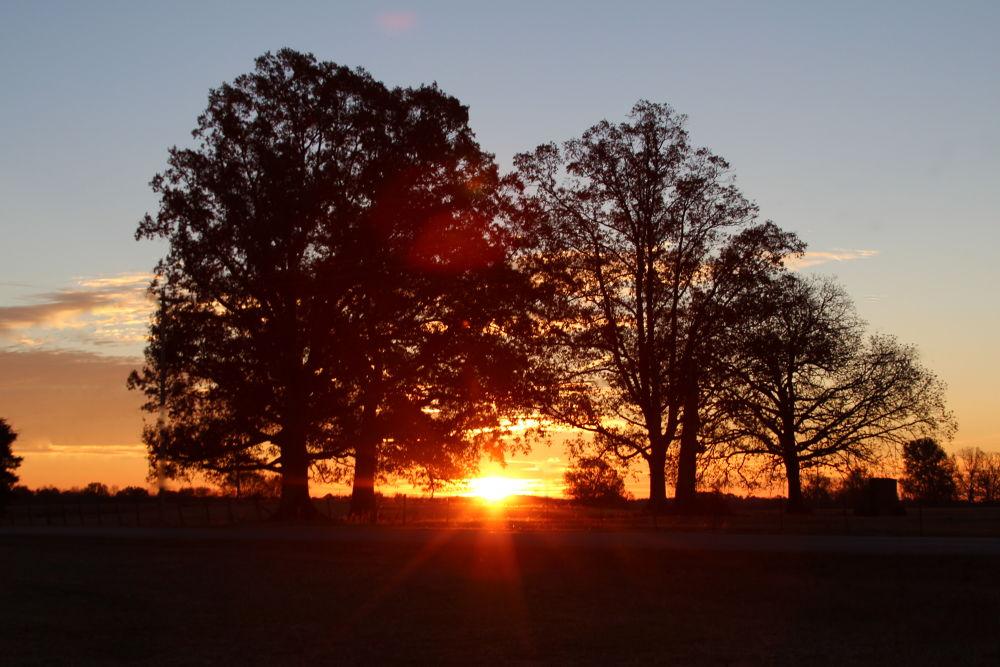 Sunrise Oaks by Brents Pepper