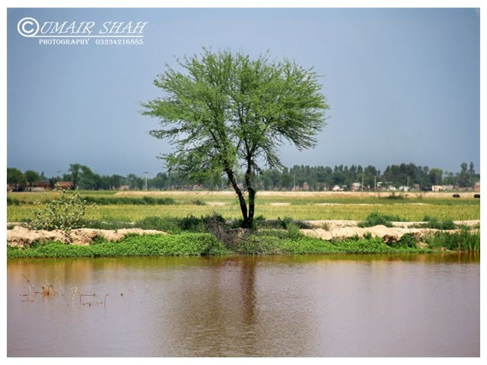Tree by Umairshah