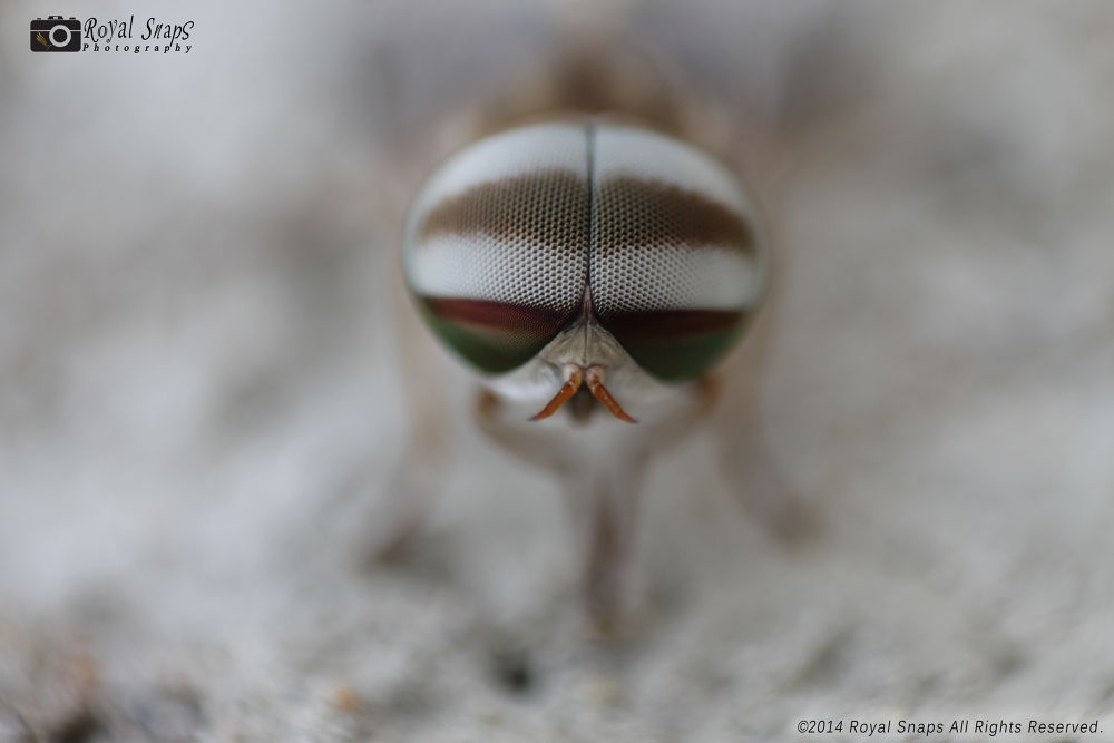 A House Fly. by Rajat Patel