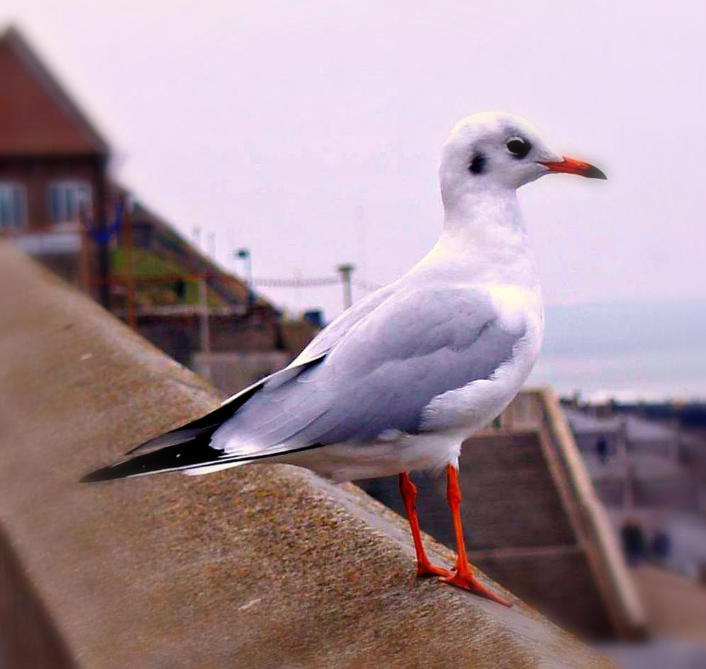 gull by Tim Durrant