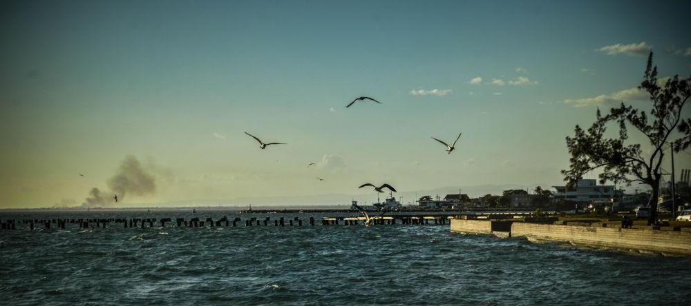 Seagulls  by Nicholai Clarke