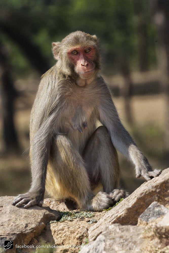 Monkey by ashk