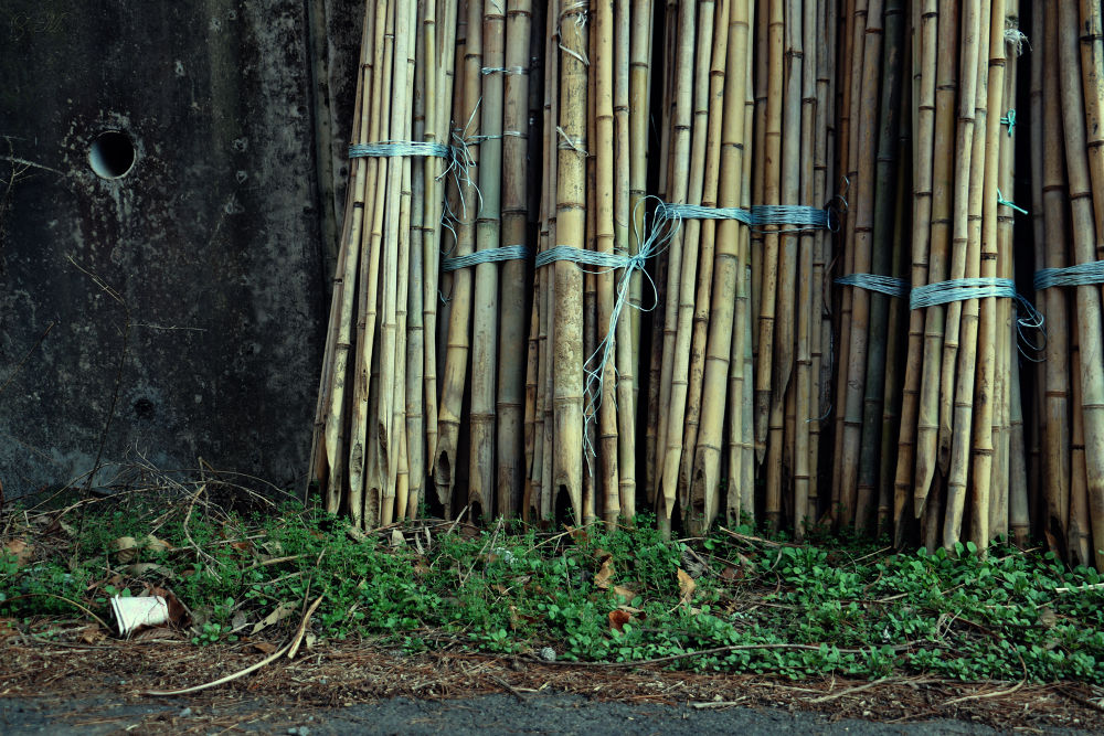 Sugar Canes 2 by White Swan