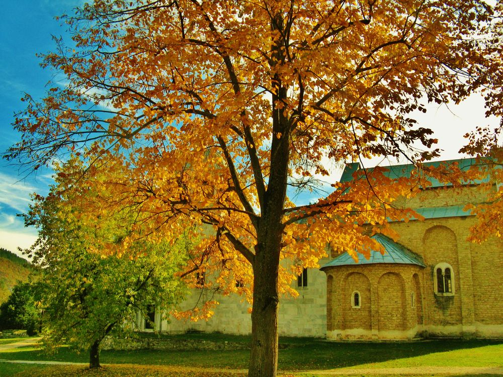 golden tree by kalimantan