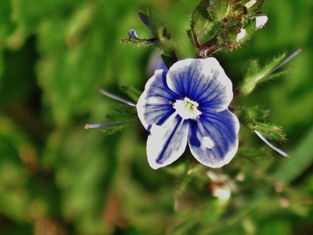 flower  by kalimantan