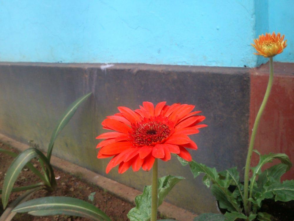 DSC_0672 by Arjun Jayachandran AJ