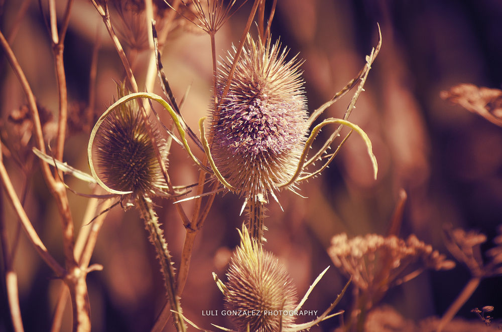 Floreciendo by Luli Gonzalez Ph
