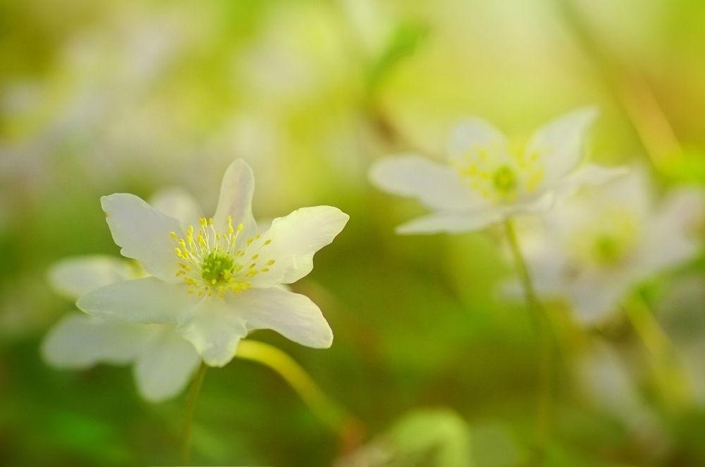 Frühlingserwachen by TanjaRiedel