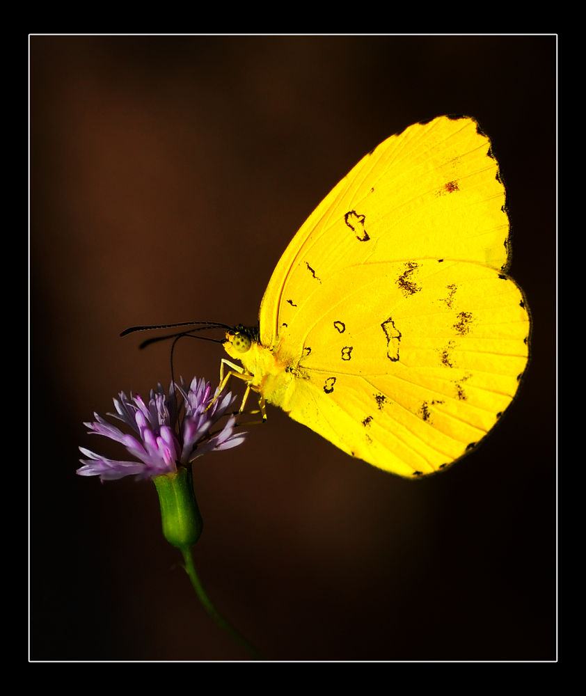 DSC_0188 by Nilupul