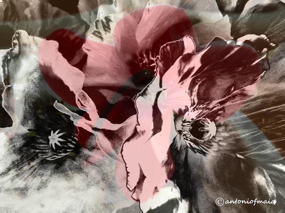 Vanity flowers MULTIFRAME WEB by Antonio F. Maia