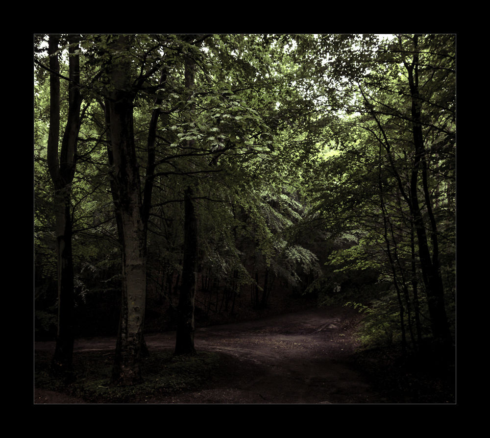 The forrest by Henny