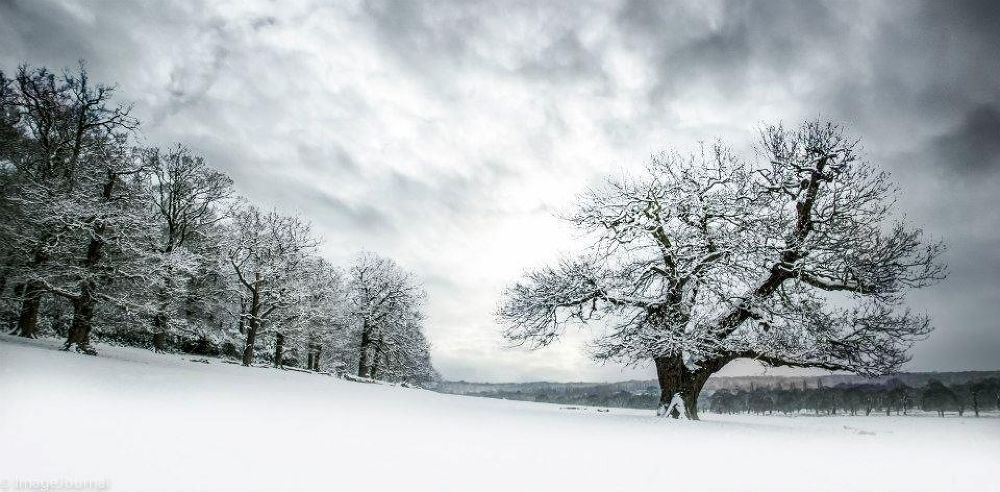A Winter Scene by ImageJournalPhotography