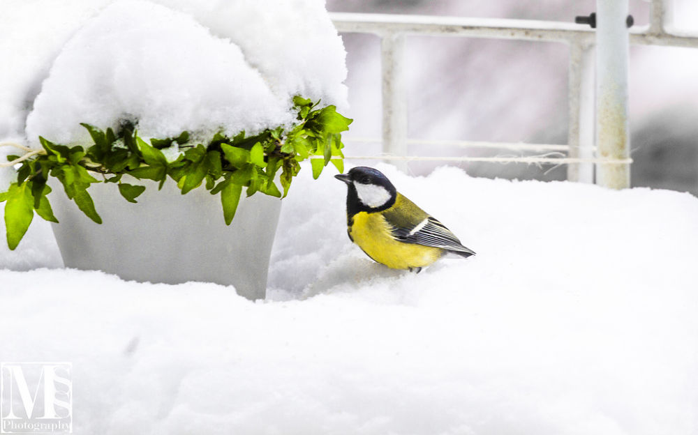 Snow Bird by mssphotography