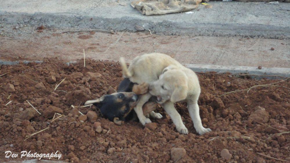 Playing Dogs by DevRane