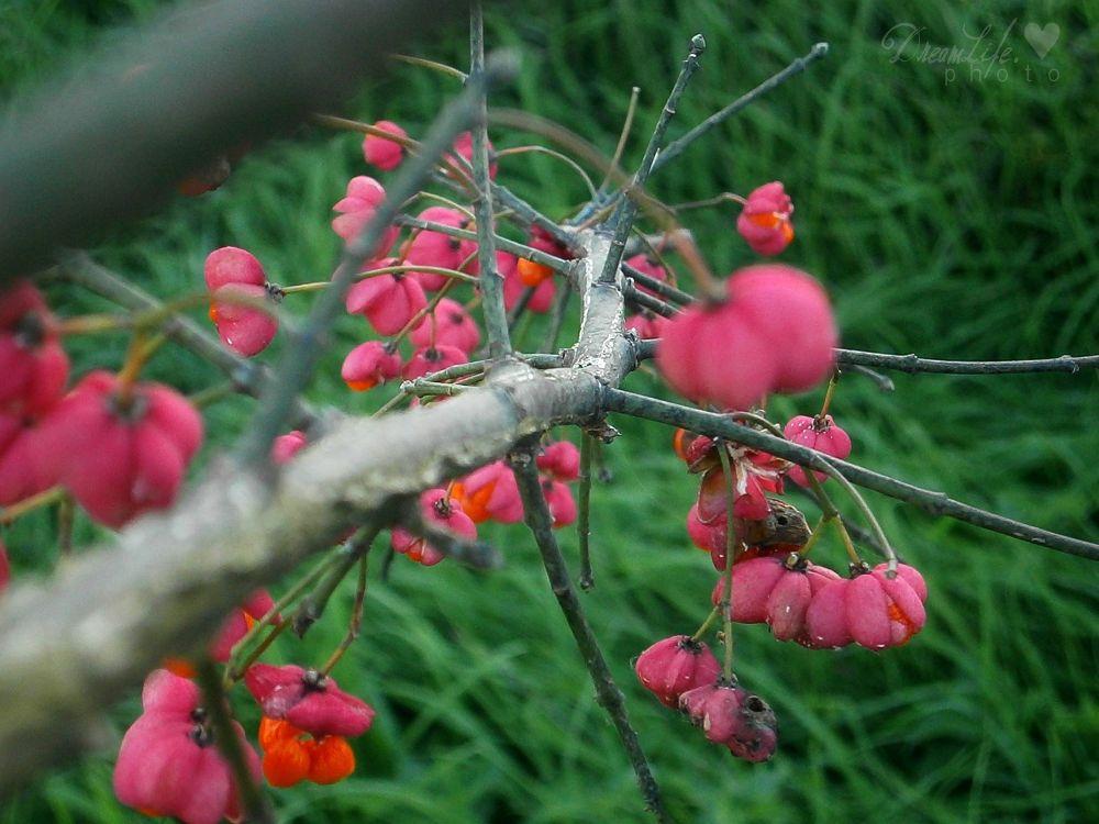 spring by Belladonna Lullaby