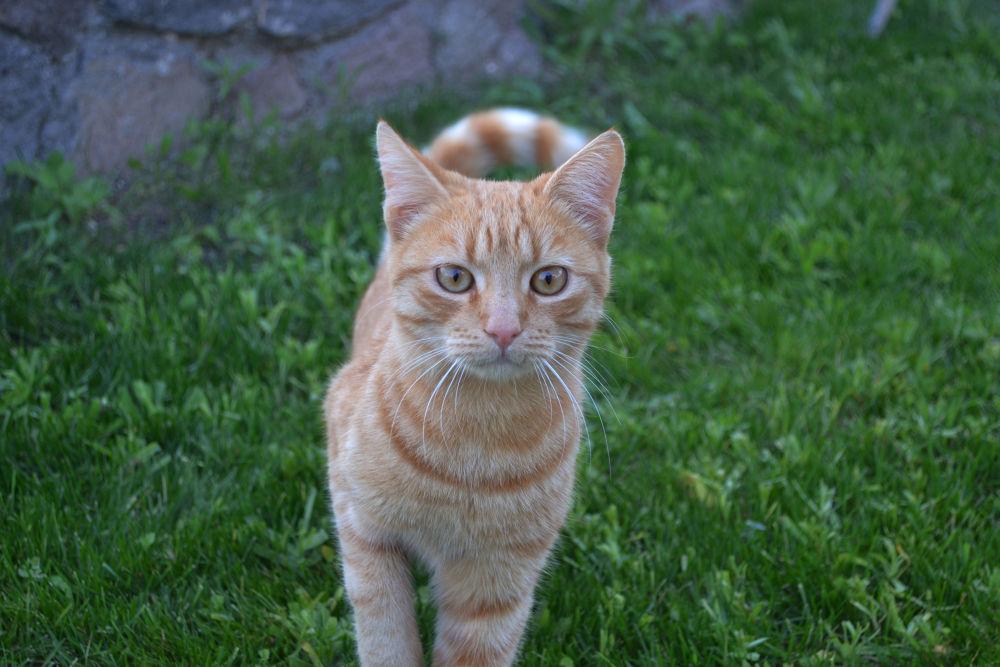 my cat. by georgelampri