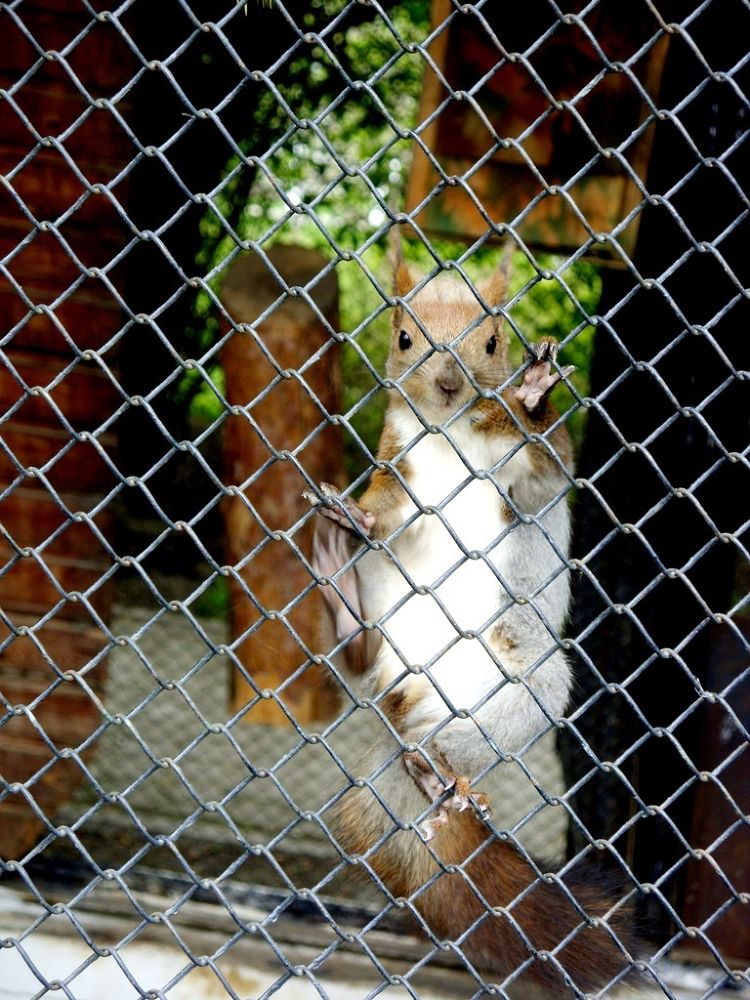 Squirrel by Roslyn