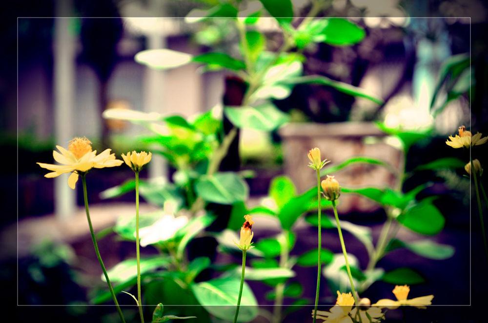 Tuan Tran Photography by tuantran35