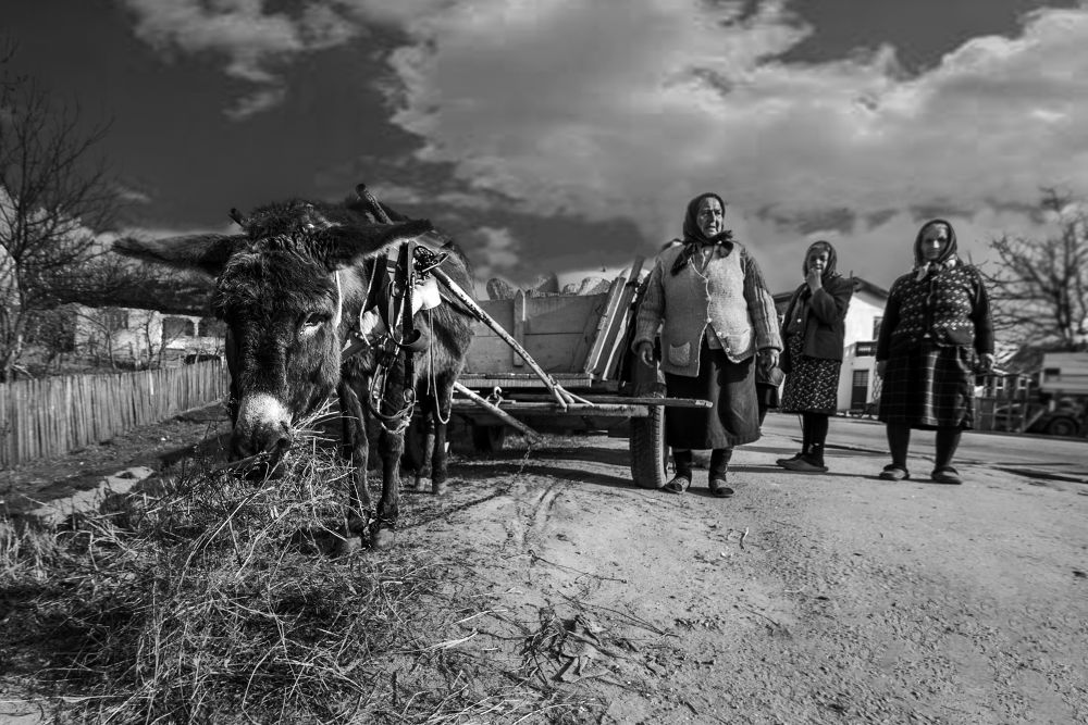 Rural by Rucsandra Calin