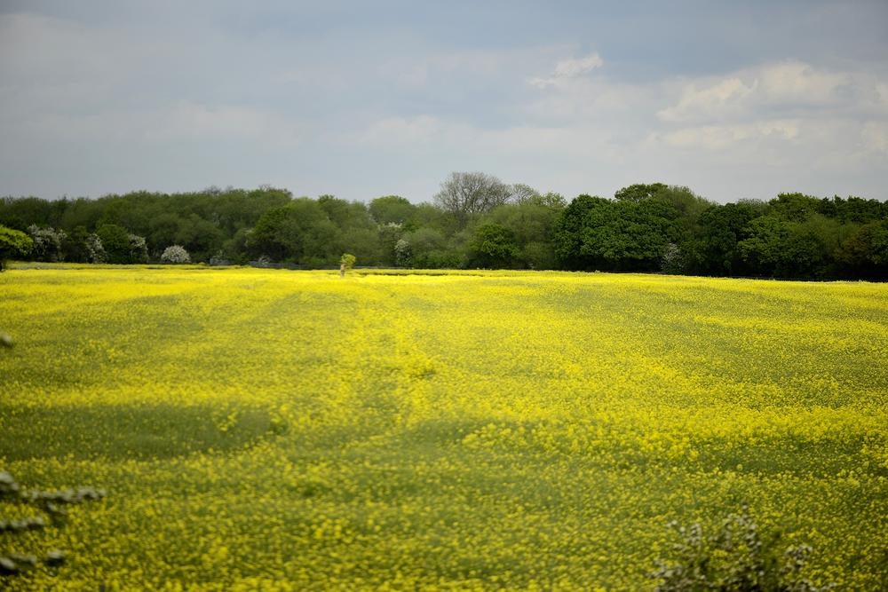 Landscape from Kings Cross to Leeds Train by goodadvice.com
