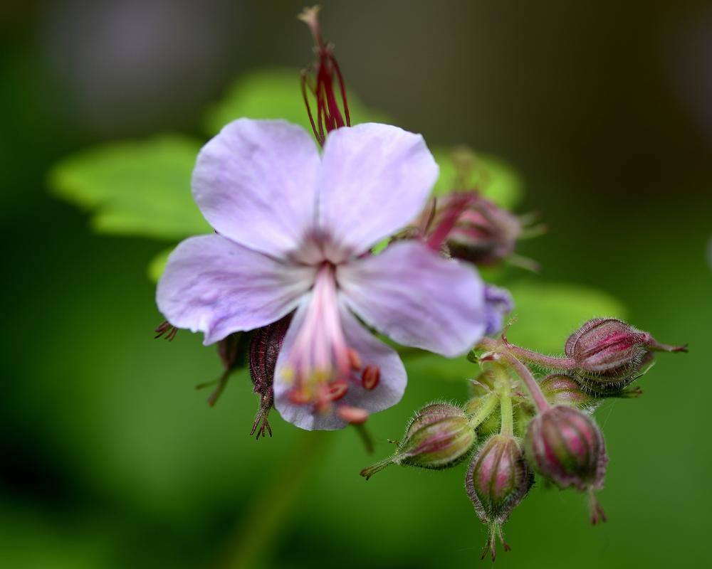 Photo in Street Photography #garden #flower #bradford #yorkshire