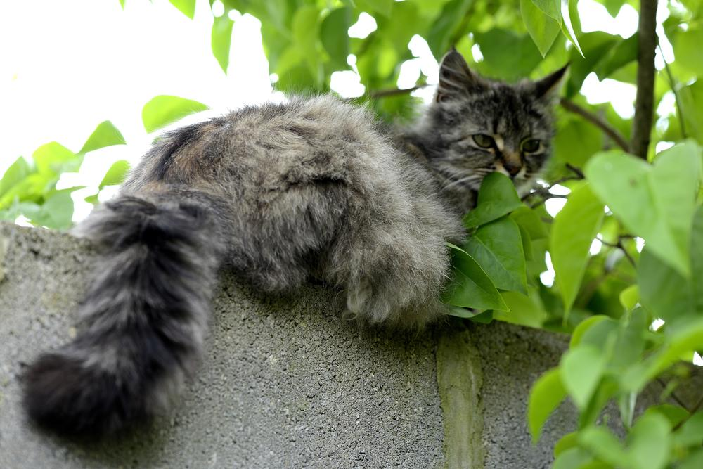 Photo in Street Photography #fluffy #kitten #cat #bradford #yorkshire