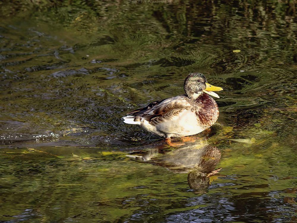 Photo in Animal #bird #animal #nature #water