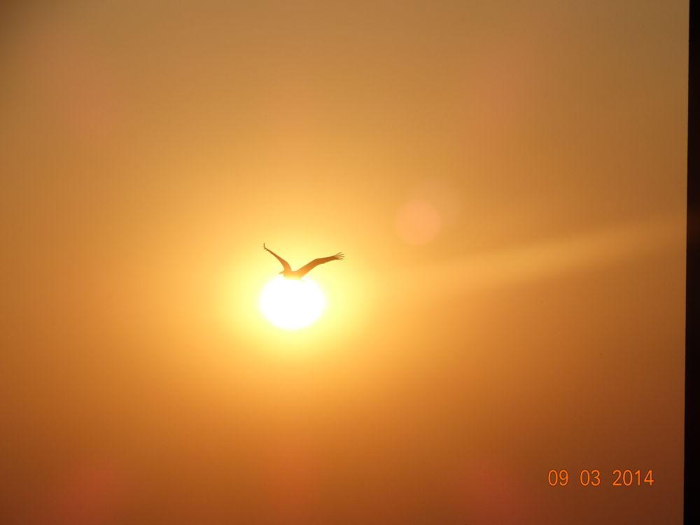 Good Morning Bird Carrying Sun....!! LoL by Shashank Kaushik