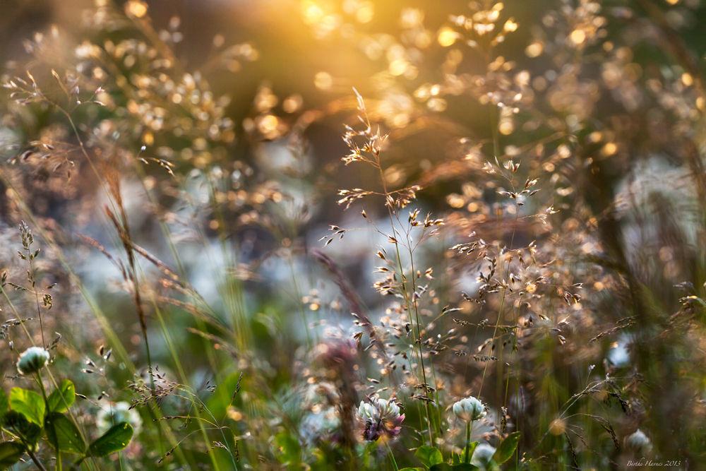 Summertime... by birhav