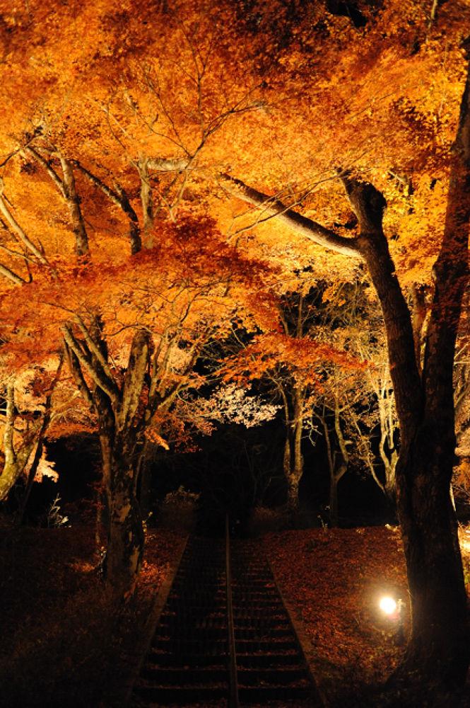 Autumn forest by YoshihitoNakamura