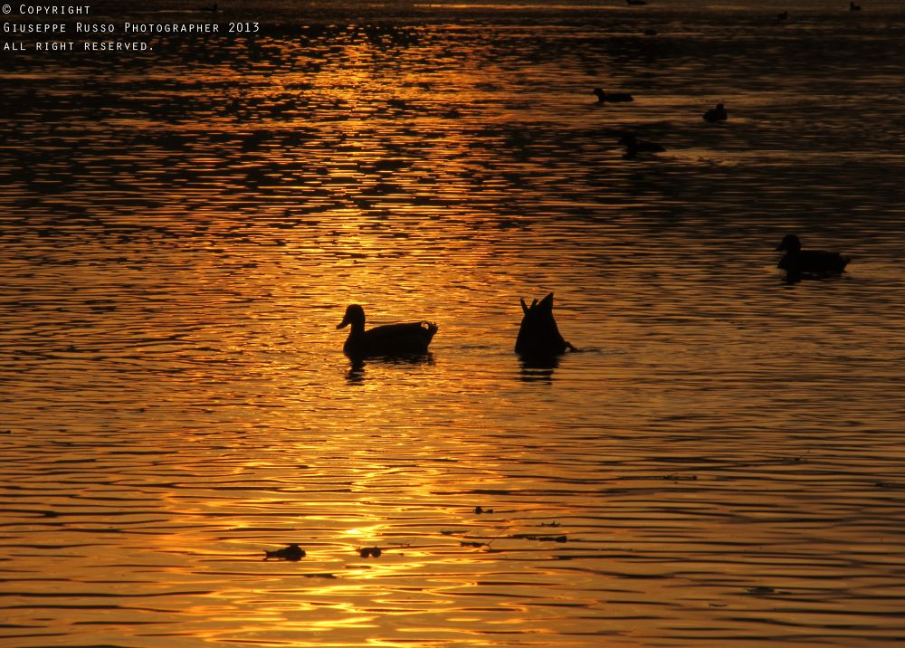 Sunset on the lake by Joseph71