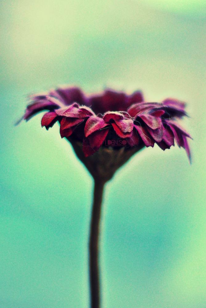 fleur p by idenso