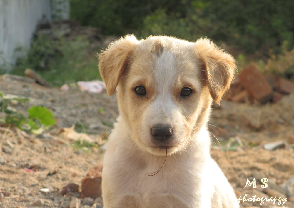 Dog by Soundar Raj