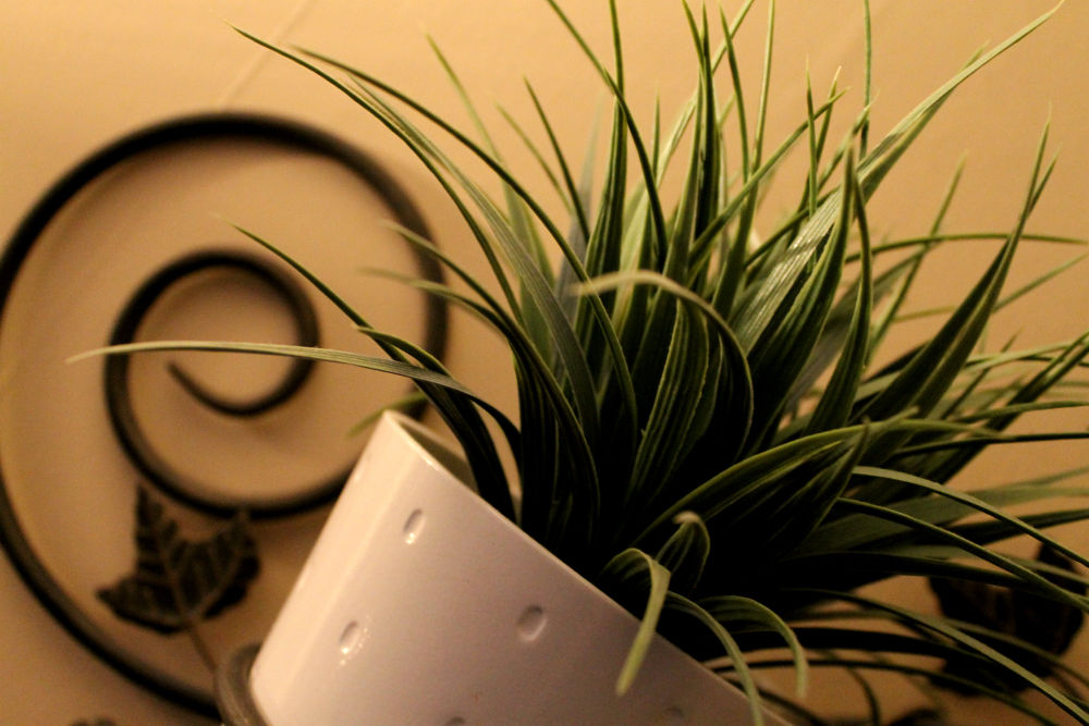 Grass by PhotoMonique