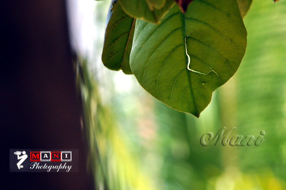 DSC_7516 by Srisasthagraphigs Mani