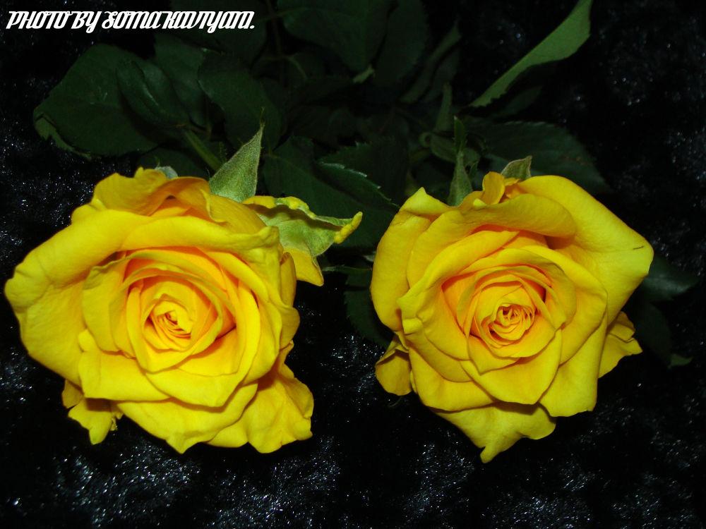 DSC07519 - Edited by soma kaviyani