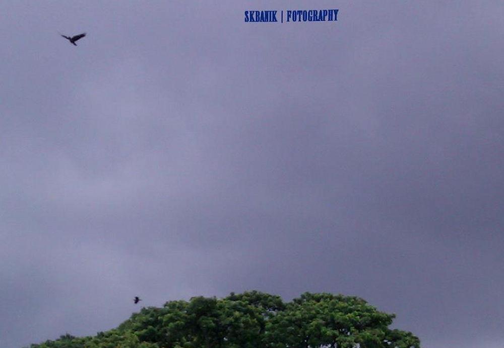 43. AT LARGE IN THE SKY.jpg by ShyamalKBanik