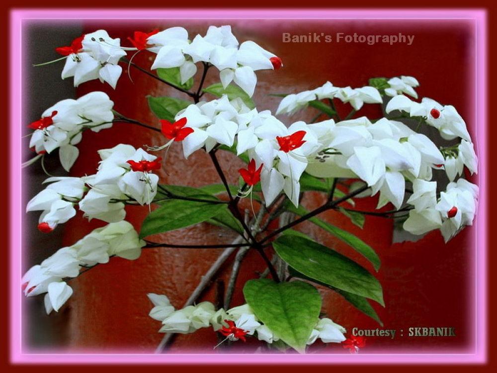 112.FLOWERS.jpg by ShyamalKBanik