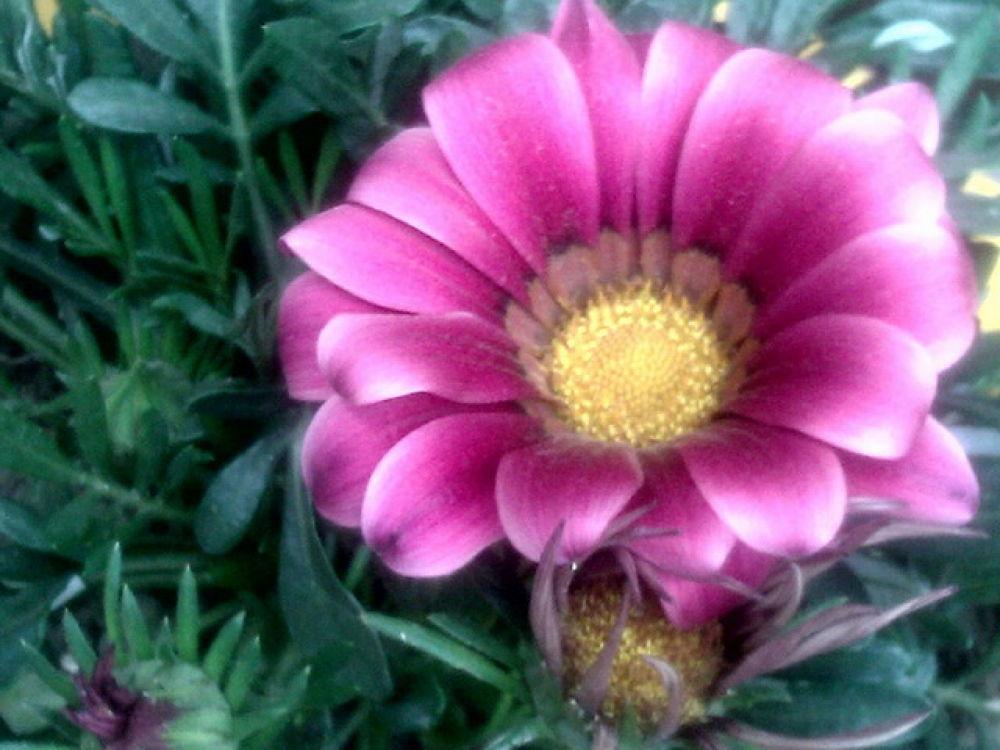 95.FLOWER.JPG by ShyamalKBanik