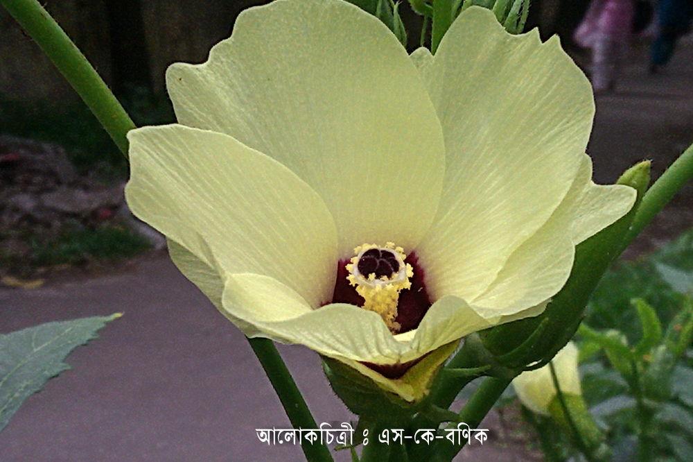 FLOWER -02.jpg by ShyamalKBanik