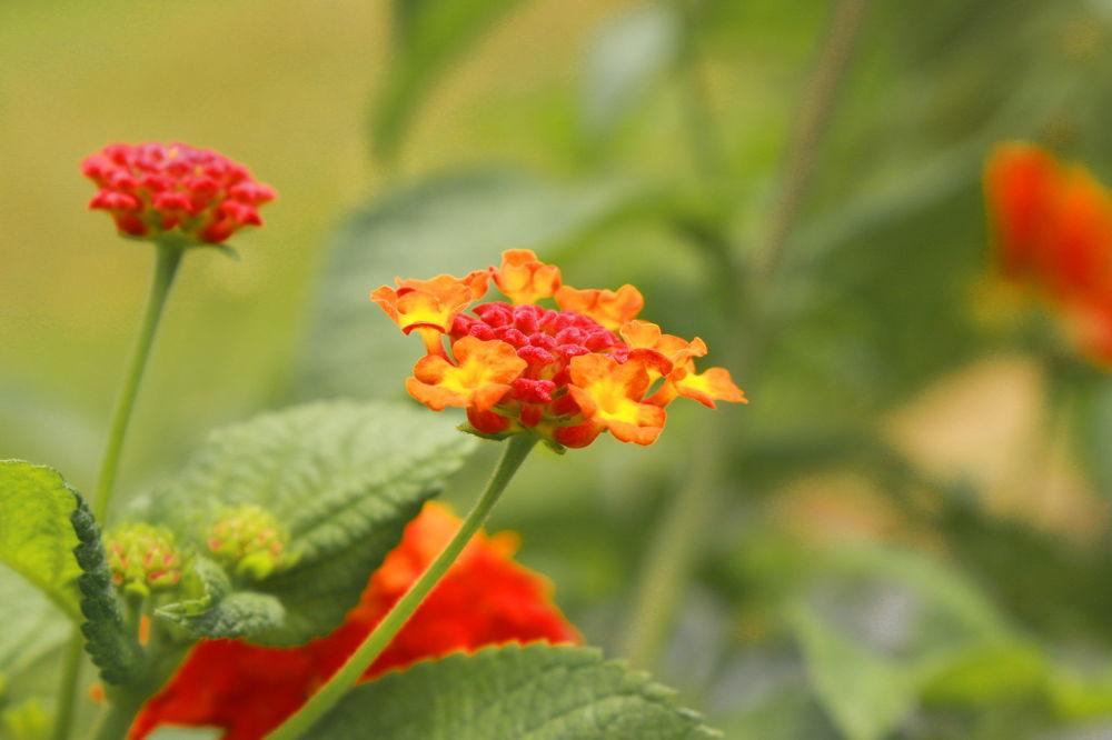 FLOWER by ShyamalKBanik