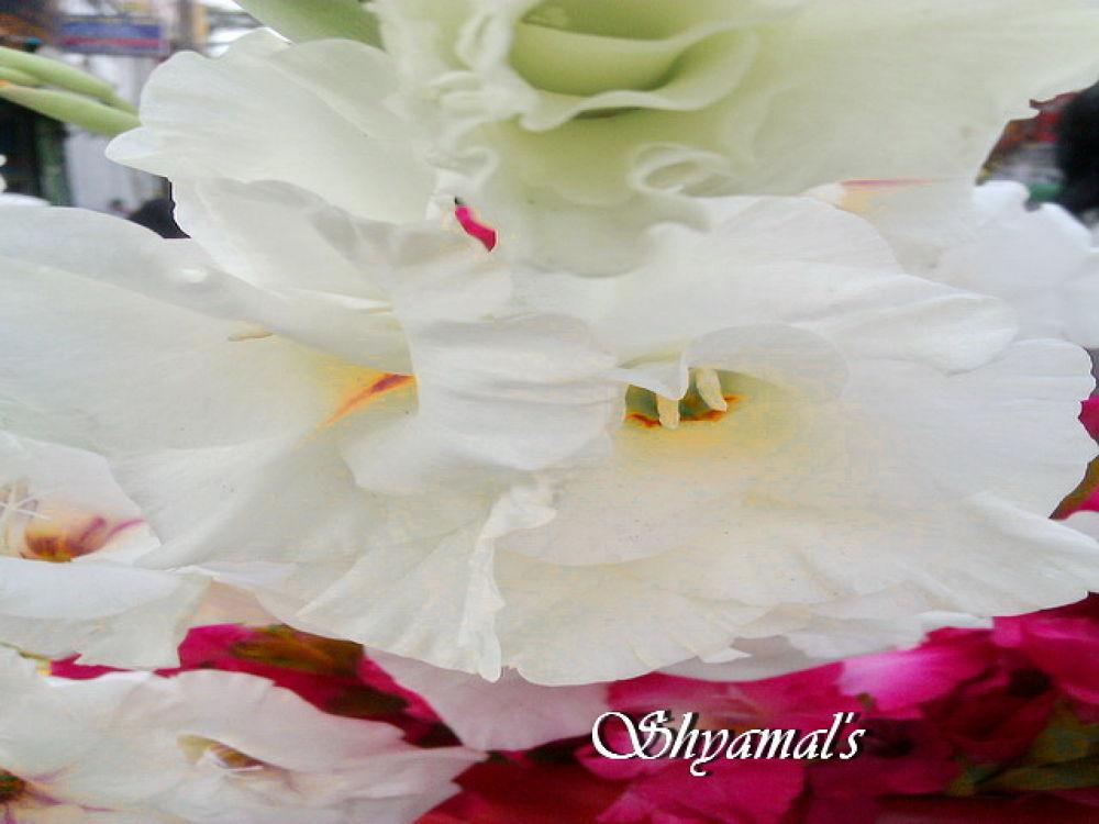 IMAG-0389-SKB by ShyamalKBanik