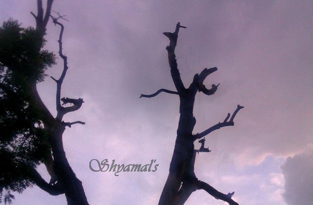 TWO DIFFERENT TREES by ShyamalKBanik