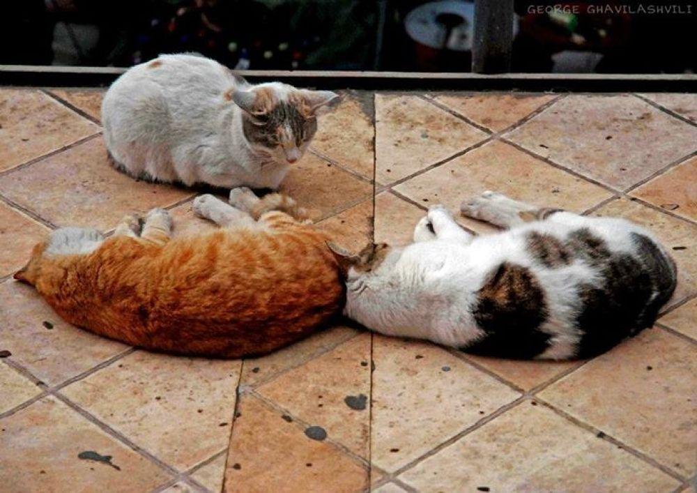 Friends... :) by Gio Ghavilashvili